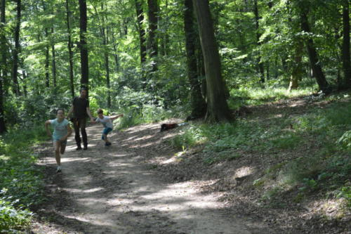Lesní pedagogika