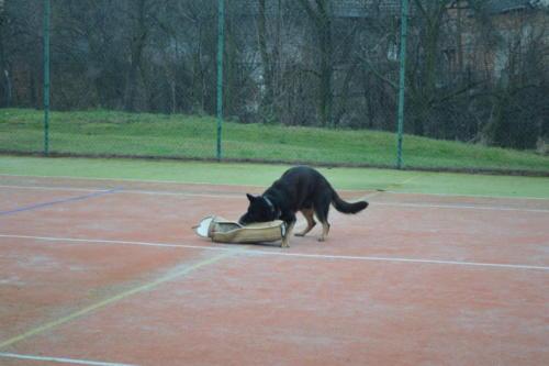 Ukázka výcviku policejního psa